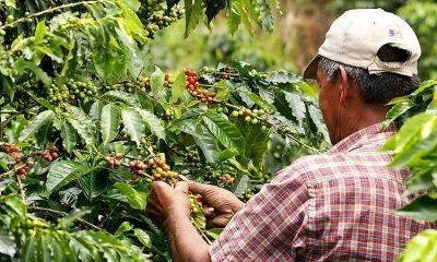 Caficultor invidente produce uno de los mejores granos de café del país