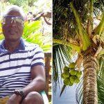 Los cultivos de coco renacen en Chocó gracias al esfuerzo de agricultor colombiano