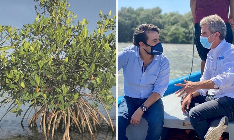 Colombia tendrá su primer vivero de Mangle, una apuesta por la supervivencia del ecosistema