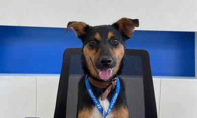 Promover la adopción, la iniciativa que inicio Hyundai con un cachorro en Colombia