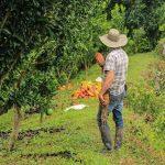 Cacao de Tumaco será materia prima para elaborar los mejores chocolates del mundo