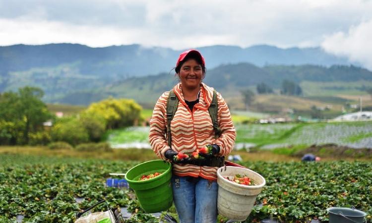 Top 5 de los productos agropecuarios colombianos más apetecidos en el mundo