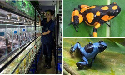 Biólogo preserva las ranas más exóticas y lucha contra el tráfico de especies silvestres