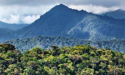 Bosques Andinos aportarían más a la reducción del cambio climático que la Amazonía