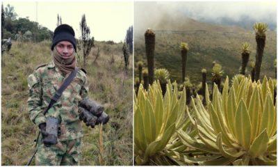 Durante la cuarentena soldados siembran frailejones en el Parque Natural de los Nevados