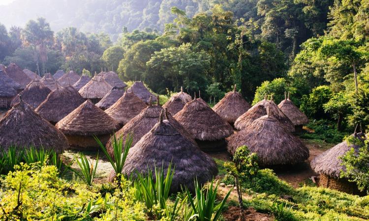 La Amazonía impera en el 91% de los territorios indígenas ecológicamente en buen estado