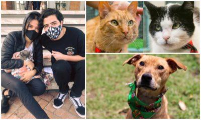 ¡Récord positivo! Bogotá tiene más de 5.000 solicitudes virtuales de adopción de mascotas