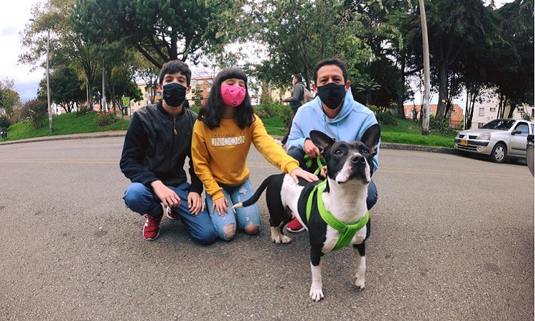 Mascotas domésticas en Colombia podrían tener 'cédula' obligatoria