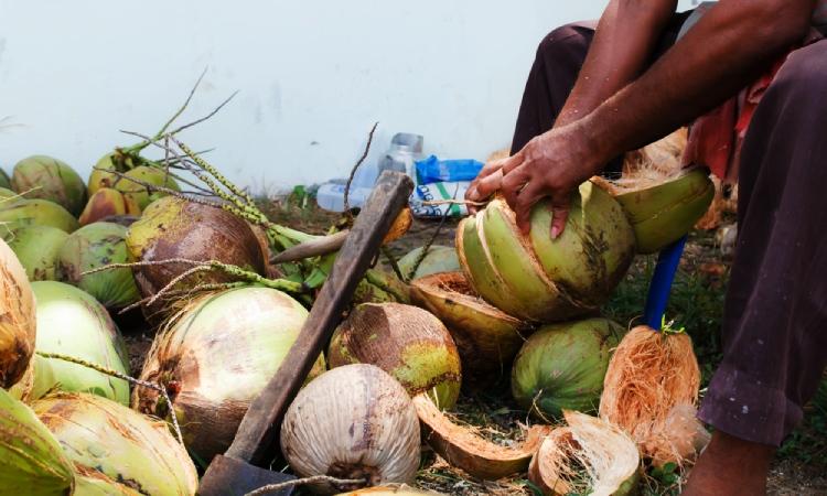 Colombiano transforma desechos del coco y genera nuevos ingresos para los cultivadores