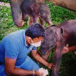 Nacimiento de elefantes gemelos sorprende al mundo, ¡adorables!