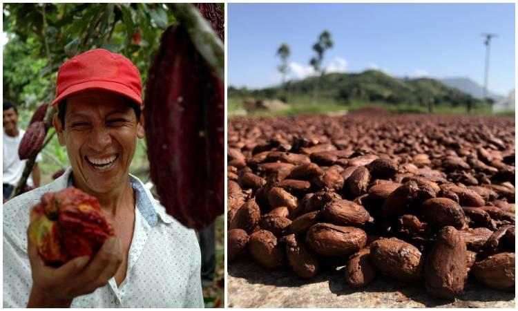 Los mejores destinos turísticos en Colombia para conocer y hacer una ruta del cacao