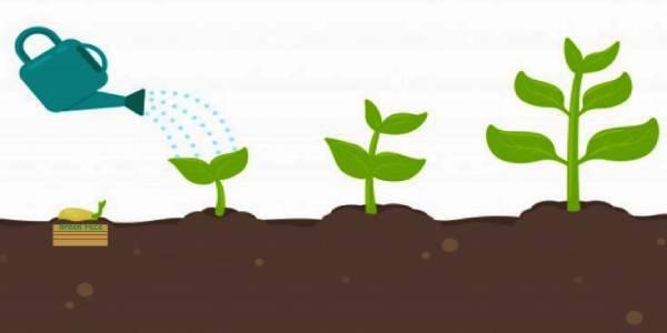 tapabocas 100% biodegradables