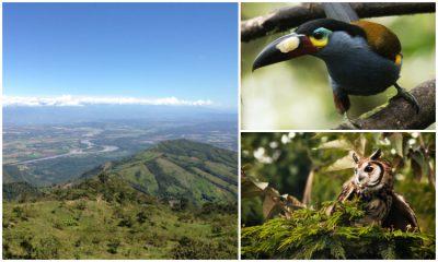 El país tiene un nuevo santuario de aves. Un lugar para proteger especies amenazadas