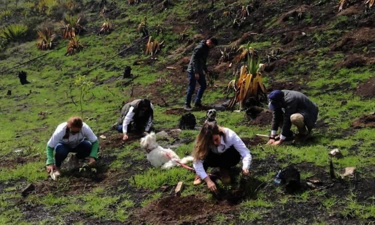 Colombia tendrá 180 millones de árboles más, ¡además podrás aportar desde una nueva app!