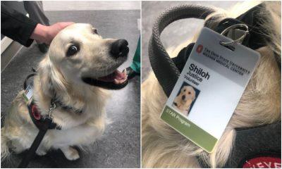 La historia del perro adoptado que alegra a médicos y pacientes de un hospital