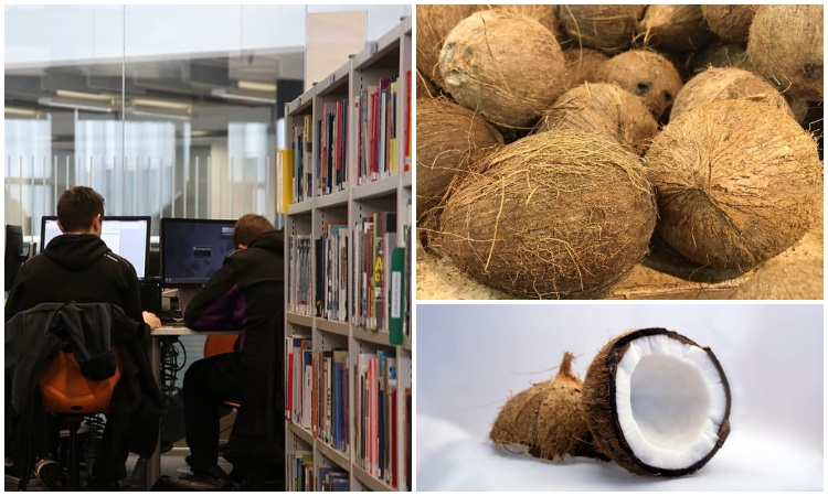 La escuela que permite a sus estudiantes pagar la matrícula con cocos y moringa