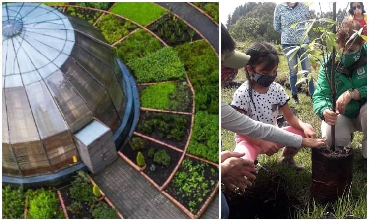 Así pueden aportar los ciudadanos para plantar árboles y construir huertas urbanas