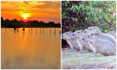 Identifican 822 especies de fauna y flora en Arauca