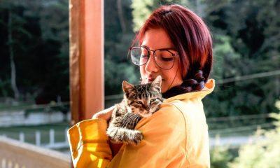 Estudio reveló que tener un gato ayuda a que las personas sean emprendedoras