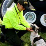 Colombia, el país donde los perros callejeros se convierten en policías