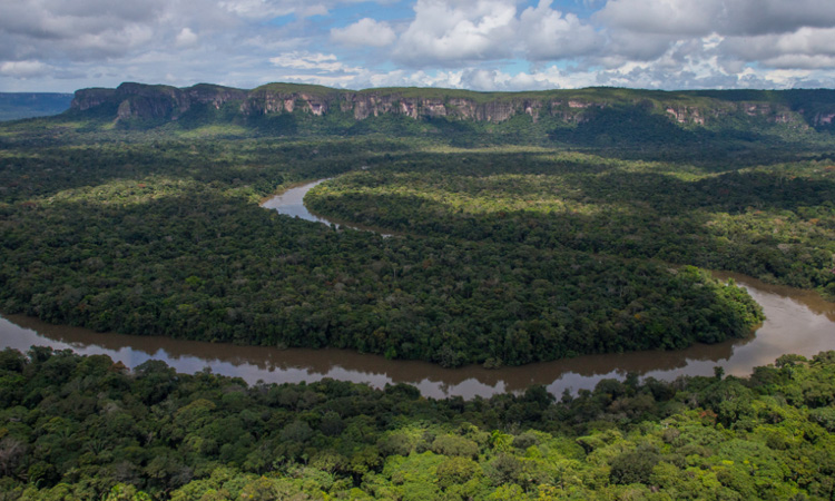 Expertos registraron más de 1.600 especies de animales en el Parque Natural de Chiribiquete