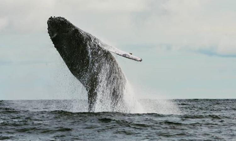 Proyecto de ley que propone crear una Autoridad Nacional para la sostenibilidad en el territorio marino