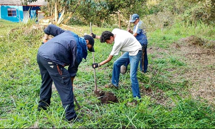 Para proteger el oso perezoso siembran más de 800 árboles en Cundinamarca