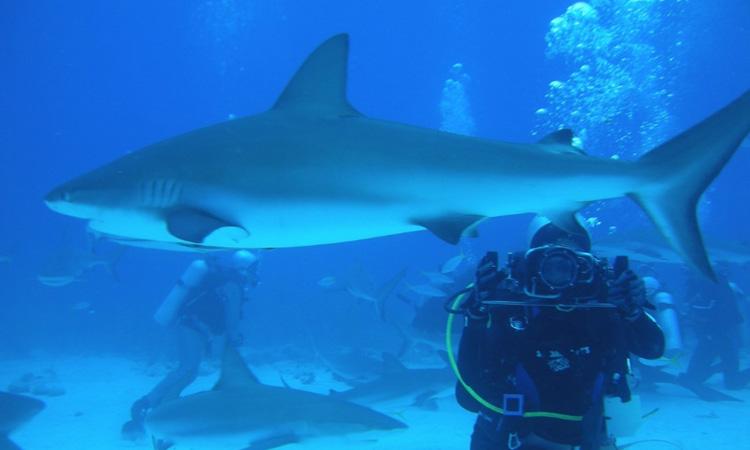 Las fundaciones que protegen a tiburones y demás especies marina en Colombia ¡Un trabajo de admirar!