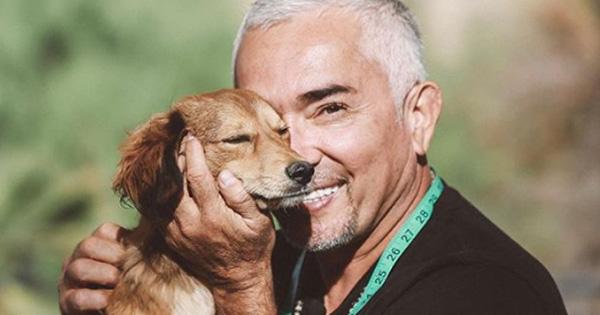 César Millán afirma que los perros callejeros son las mejores mascotas ¿Qué opinas?