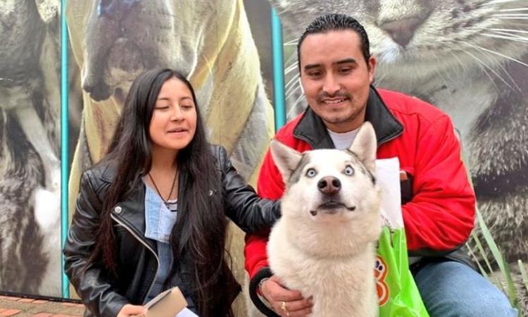 En una jornada de adopción en Bogotá se entregaron a más de 100 perros y gatos La Nota Positiva