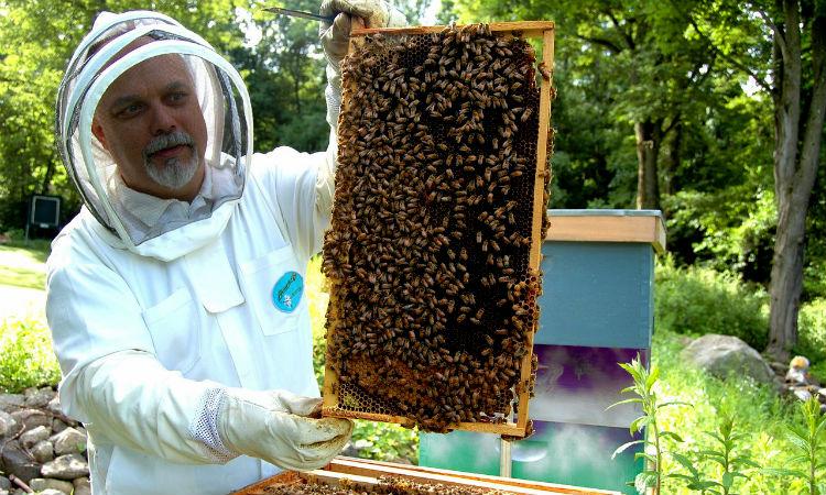 Colombia busca proteger a las abejas limitando y hasta prohibiendo el uso de insecticidas