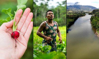 La cartilla que explicará los usos de doce plantas tradicionales amazónicas