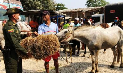 Toneladas de pasto fueron entregadas para alimentar caballos aislados por la cuarentena