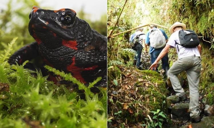 Colombiano destina su propiedad para proteger rana que apareció después de casi 20 años