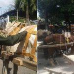 Cámara de Representantes aprobó proyecto de sustitución de vehículos de tracción animal