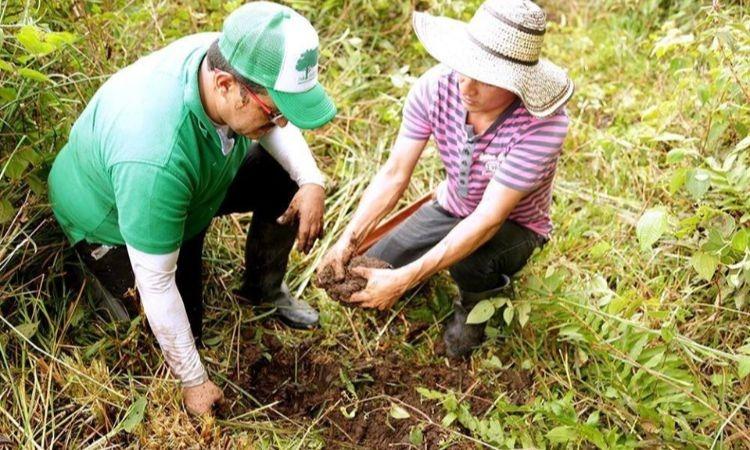 El reto de reforestar la Amazonía con el apoyo de campesinos en medio de la pandemia
