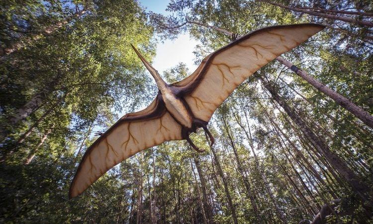 El hallazgo del primer fósil de pterosaurio en Colombia_ un volador de la prehistoria