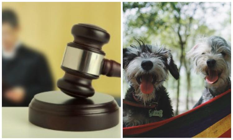 Histórico: tutela logra que a un perro le reconozcan derechos para recibir medicamentos