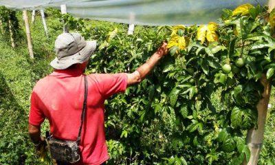 App colombiana que ayuda a financiar el agro gana importante premio latinoamericano
