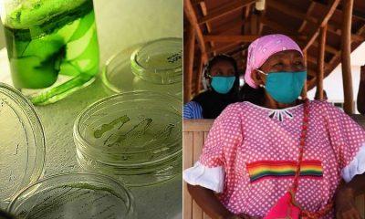 El suplemento que podría combatir la desnutrición de los habitantes de La Guajira