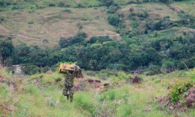 Ejército siembra más de 5 mil árboles en Tolima y deja un legado para los niños del país