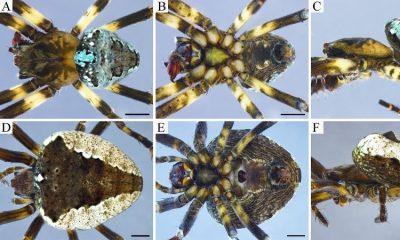 Hallan nueva especie de araña en las montañas de Colombia