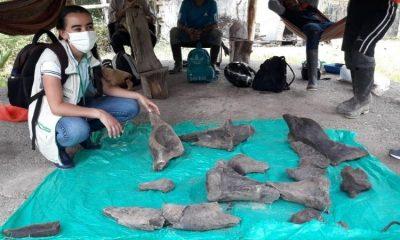 Hallan restos fósiles de un mastodonte en Risaralda