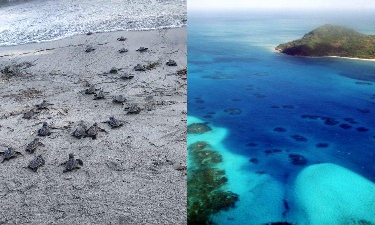 Nacieron más de 70 tortugas carey en Providencia, una especie en peligro de extinción