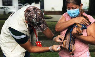 Ciudad colombiana establece Sisben para perros y gatos en situación vulnerable