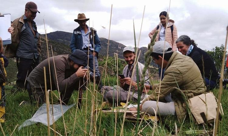 En Boyacá descubren tres nuevas especies que se suman a la gran biodiversidad del país