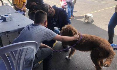 Así funciona la cédula digital para mascotas que buscan sea obligatoria en Colombia