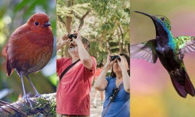 Colombia se coronó campeón mundial de avistamiento de aves en 2020