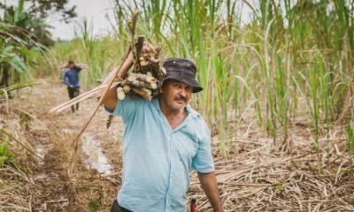 Programas agrícolas de Colombia reciben cofinanciación millonaria de la Unión Europea