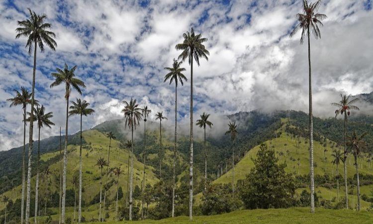 Reconocen al Valle de Cocora en Quindío como sujeto de derechos